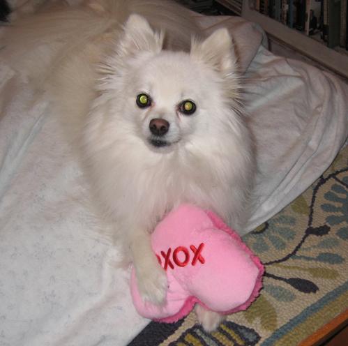 Auggie A Love Story Auggies Doggie Bloggieauggies Doggie Bloggie